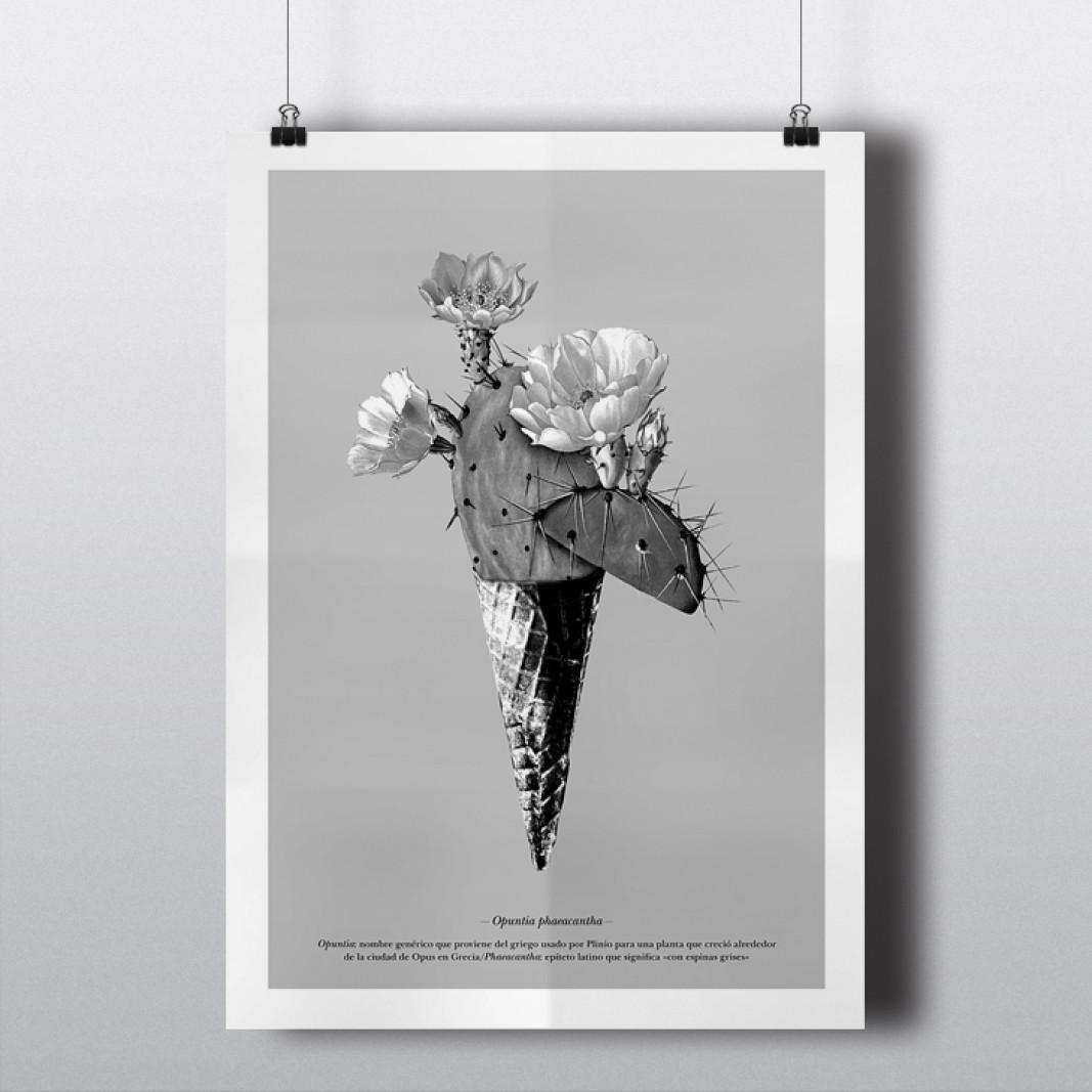 poster_cactus_05